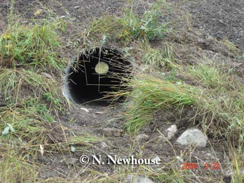 Badger culvert in British Columbia. Photo credit: N. Newhouse and T. Kinley.