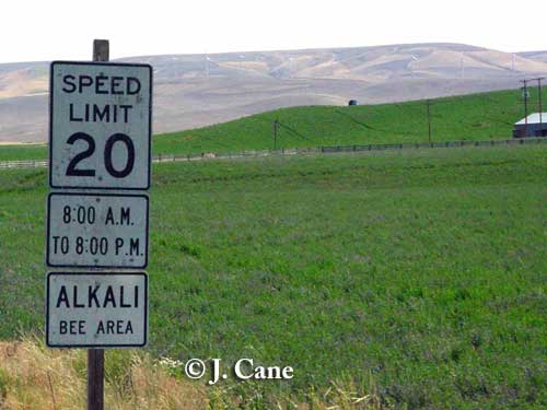Reduced speed zone for alkali bee crossing, Washington. Photo credit: J. Cane.