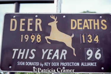 Key deer deaths sign.