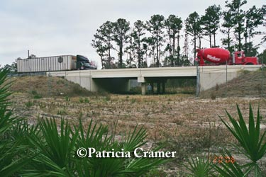 Florida's SR 40 black bear underpass.